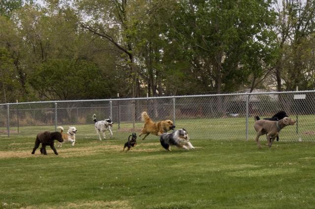 dog park visits